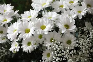flowers-200602_1920