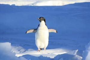penguin-56101_1920